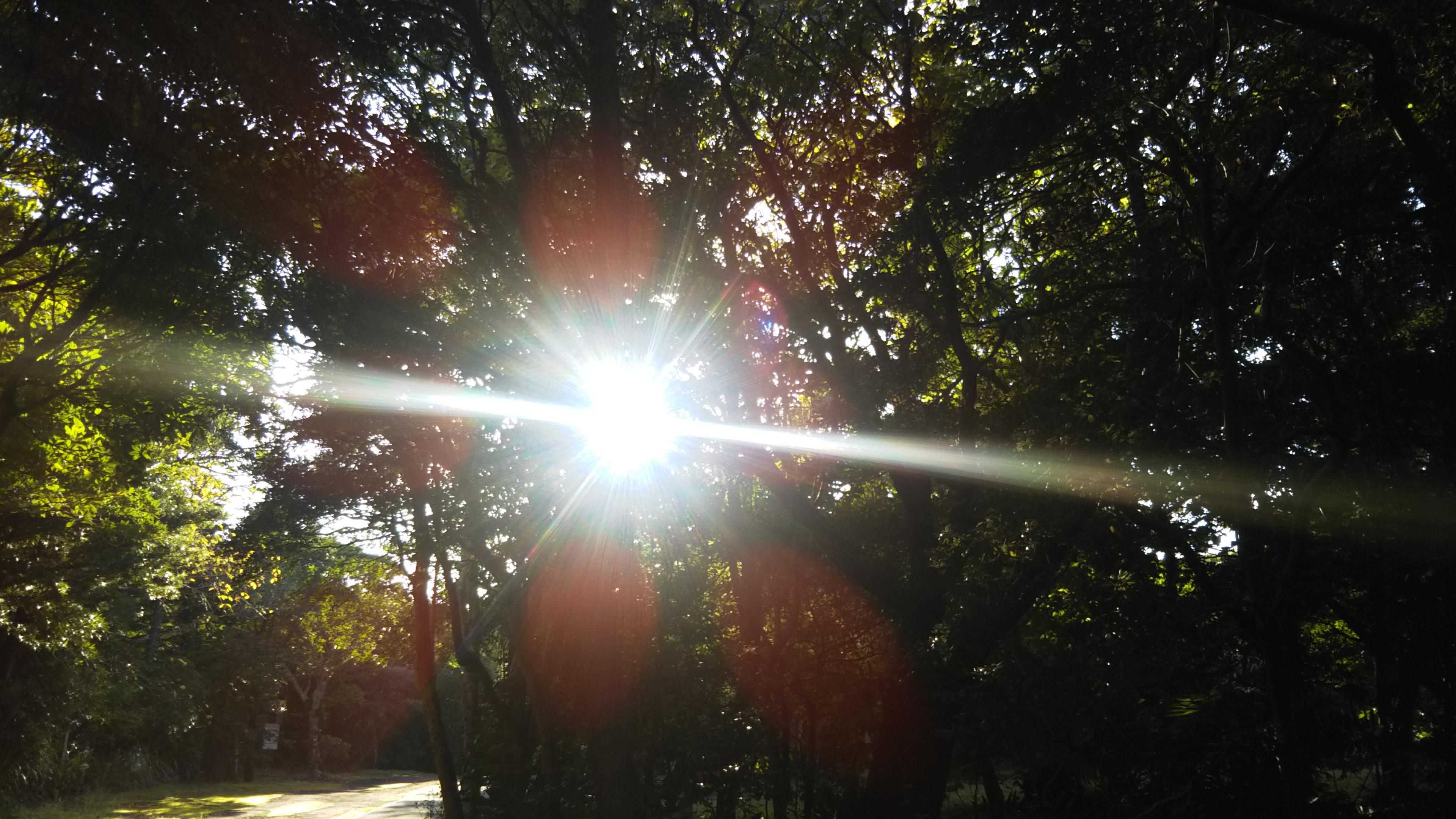 木漏れ日セラピーウォーク