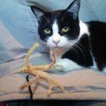 猫にも癒される雑貨屋★アトリエ椎(しいのき)